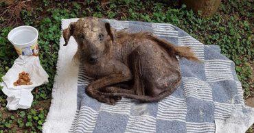Больной пёс неподвижно лежал на улице... Он сдался, не рассчитывая на помощь людей!
