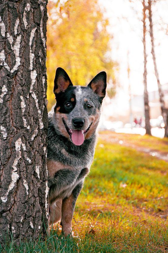 собака в парке рис 2