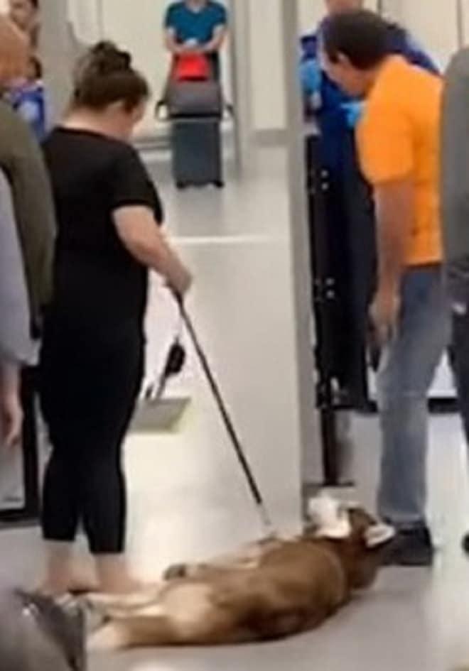 Собаку тянут за поводок