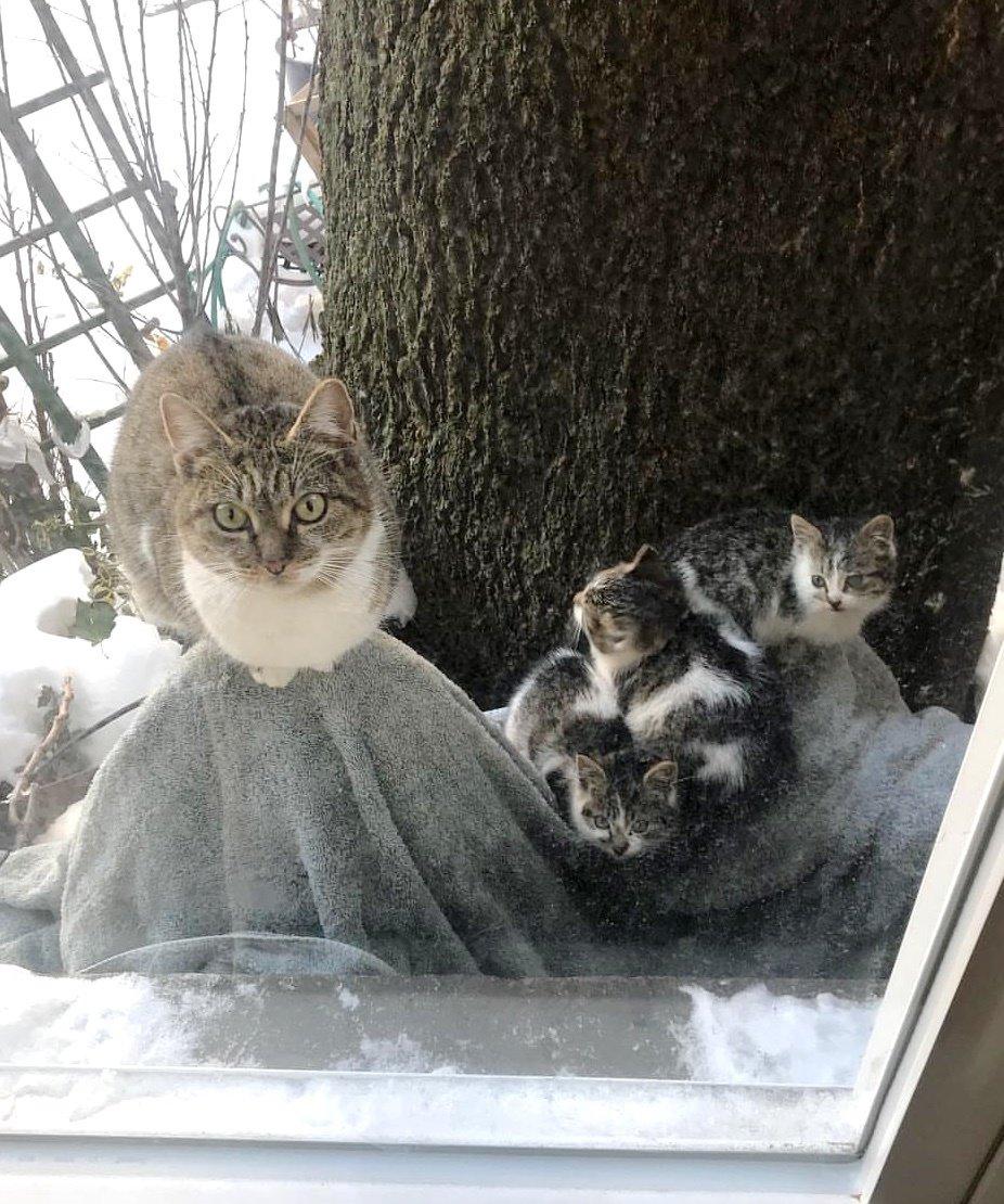 кошка с котятами за окном