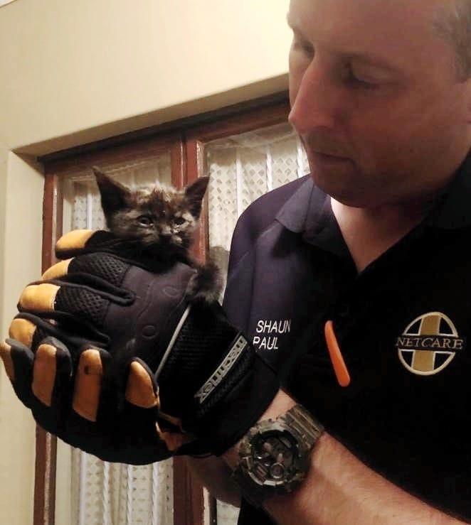 котенок на руках