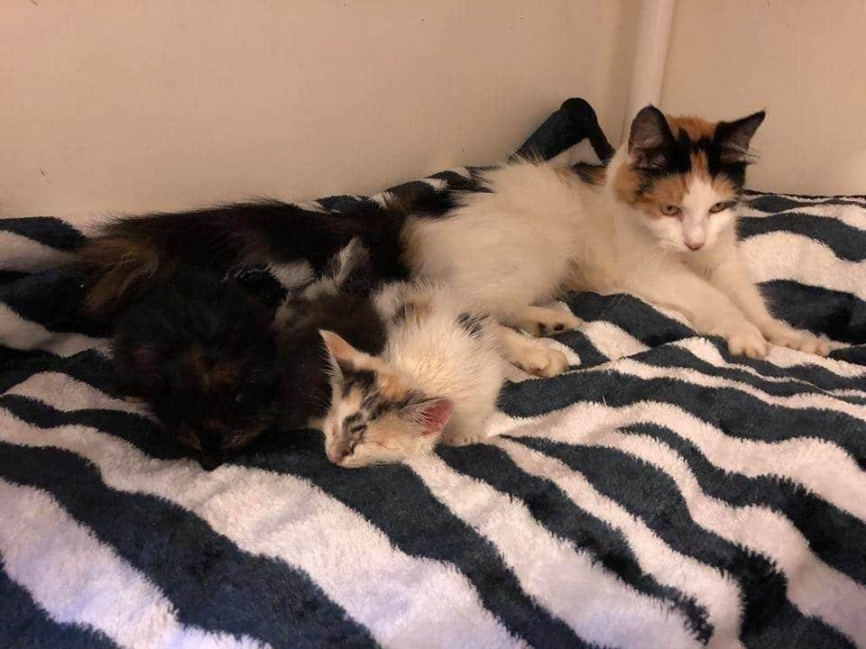 кошка с котятами на кровати