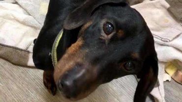 Дрожа от холода и страха, на дне канавы лежал брошенный пёс. Его никто бы не заметил, но случайность спасла ему жизнь