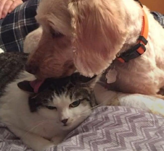 Кошка и пес