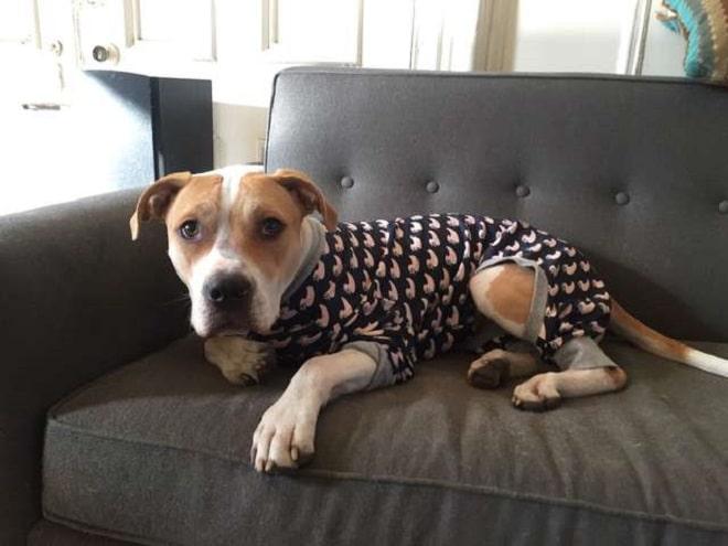 Пес в пижаме
