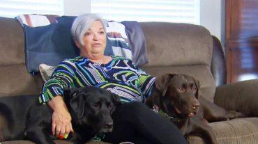 «Я в беде!» - проговорила лежавшая на полу женщина, и два пса поняли, что нужно делать