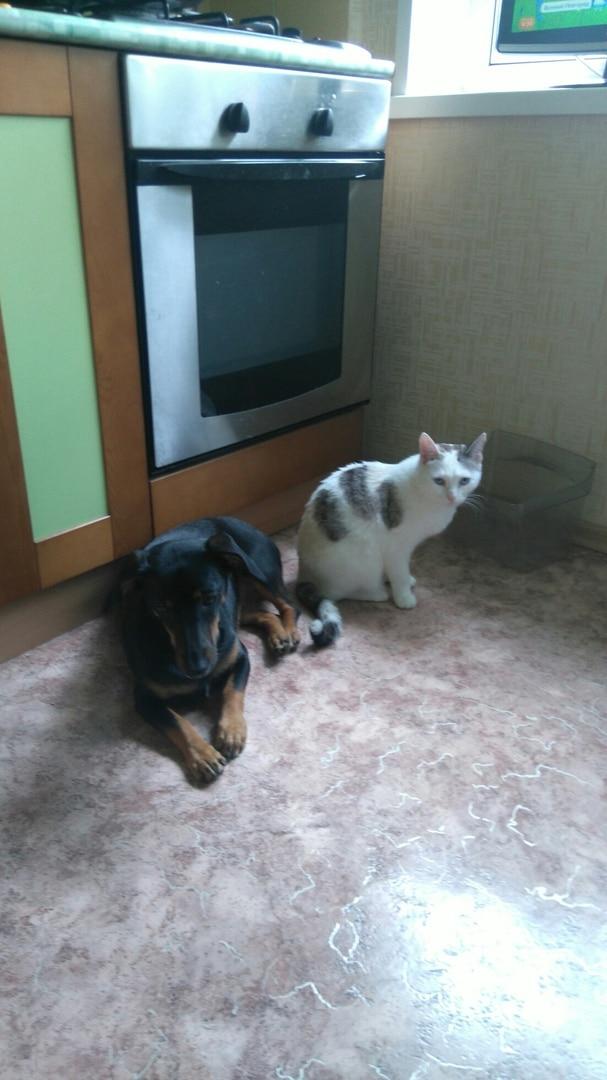 кот с собакой дружат