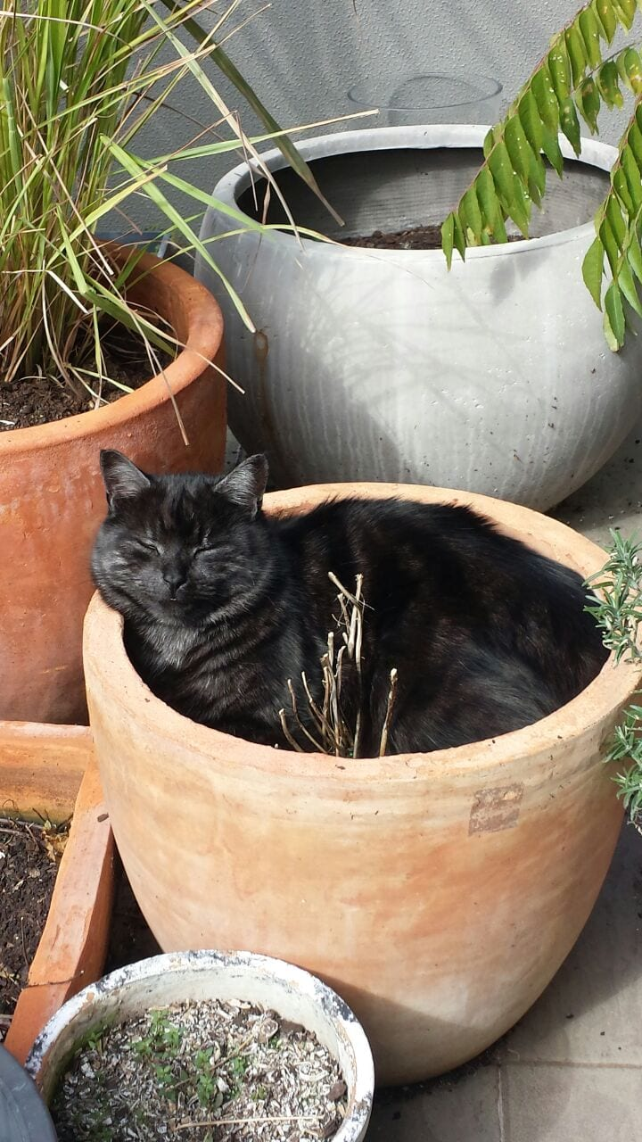 кот в горшке рис 6