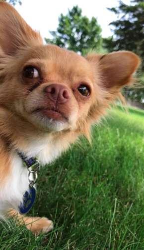 пес на улице