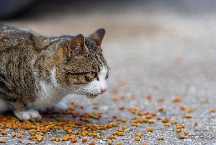 кот ест корм