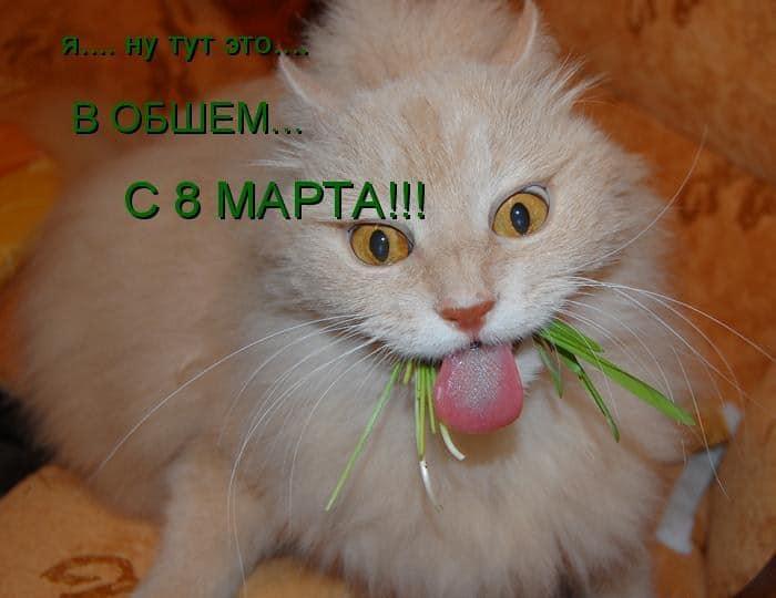 странный кот