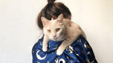 Пока девушка выбирала кота в приюте, к ней на колени запрыгнул персиковый красавец. И его хитрый план сработал!