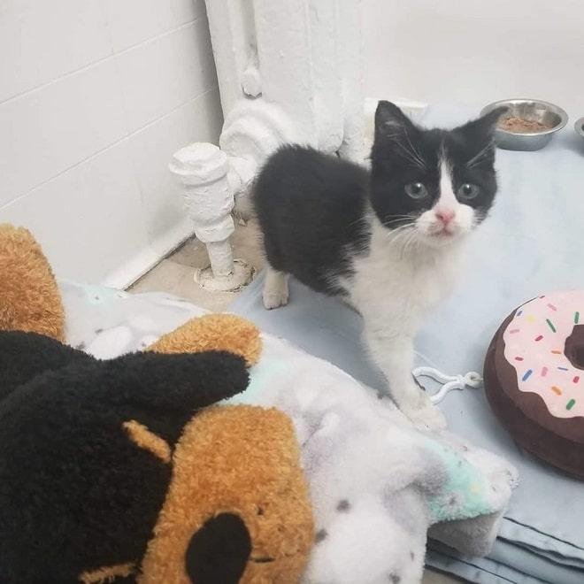 Котенок с игрушками