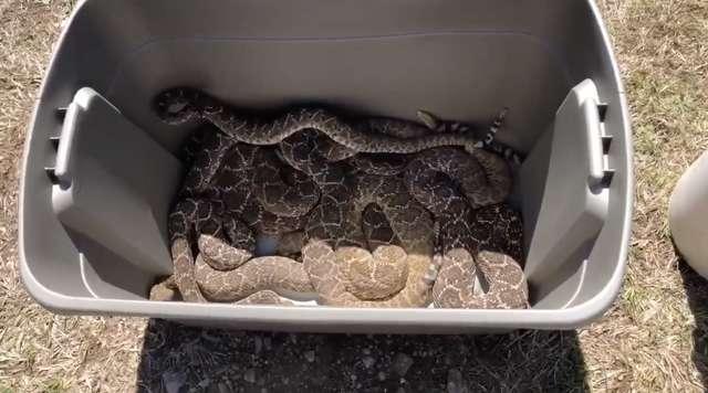 змеи в контейнере