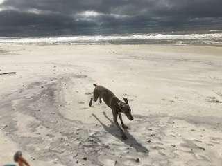 собака гуляет