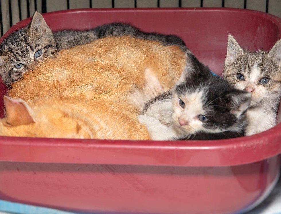 кот с котятами