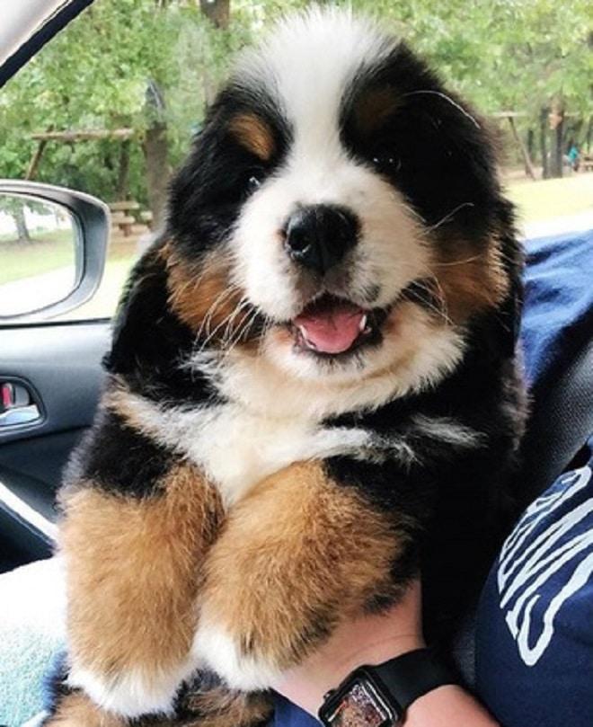 Большой щенок