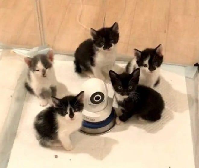 Котята с камерой