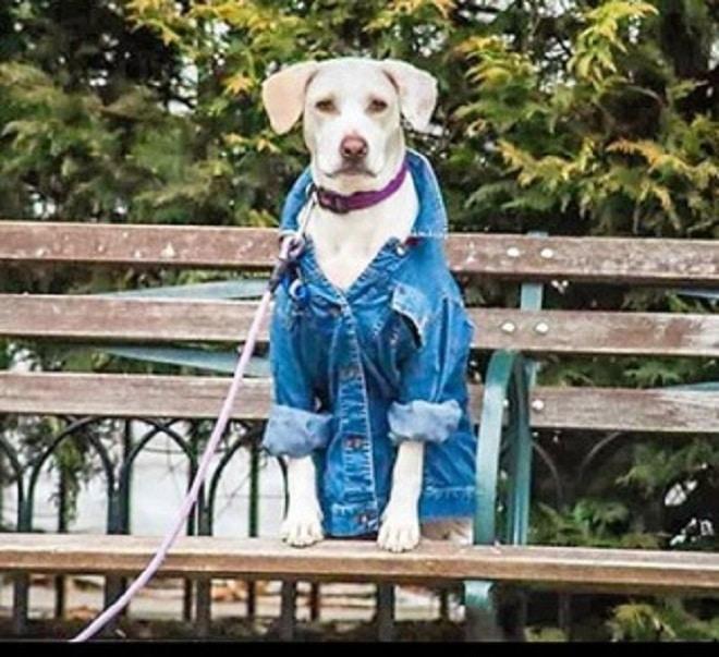 Щенок в куртке