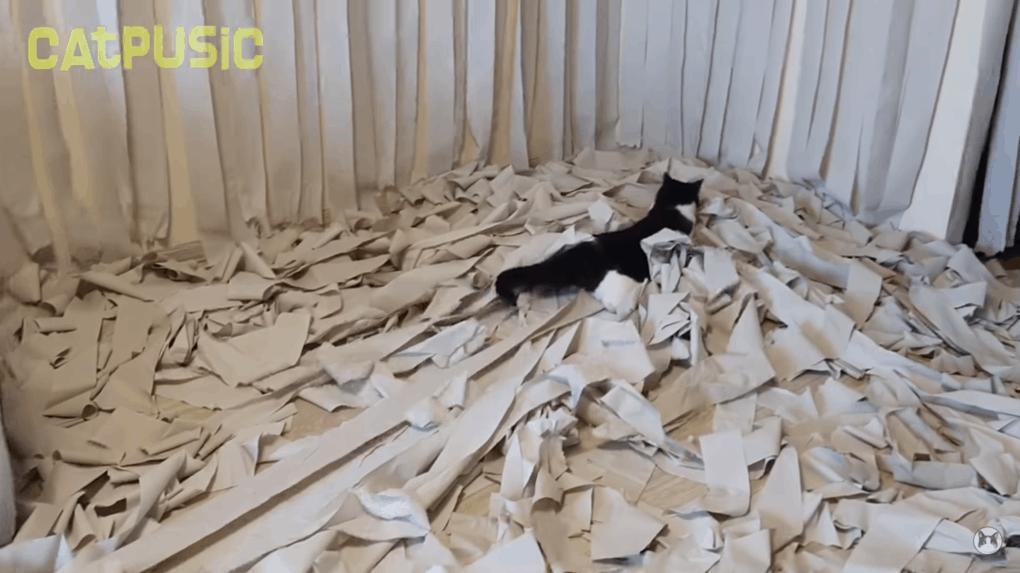 кот играет