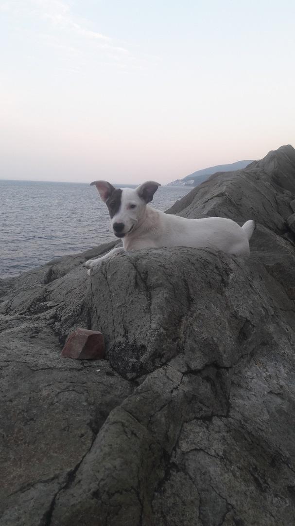 собака на море