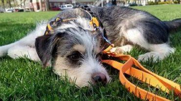 Первые недели жизни щенок провел на улице, поэтому он не сразу доверился приютившим его людям