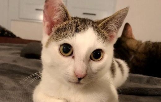 Котик рис 2
