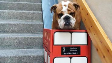 the cart for one old dog