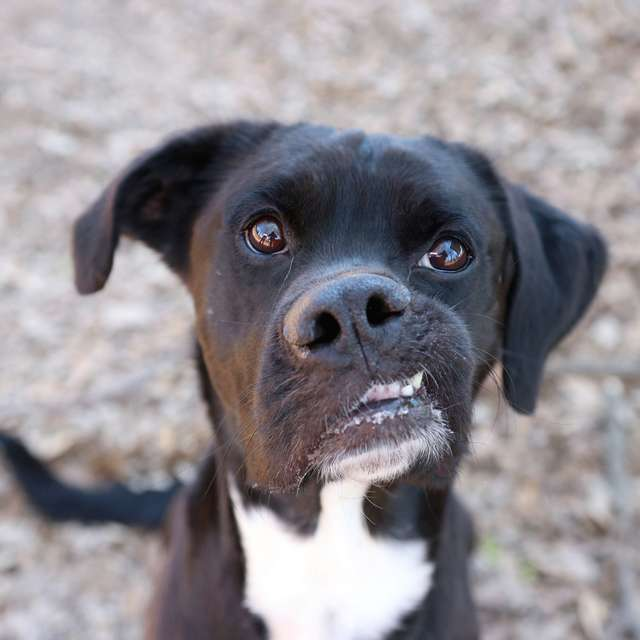 https://www.thedodo.com/close-to-home/dog-with-crooked-smile-mosley-georgia