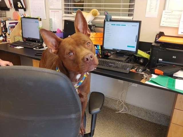 пес в офисе