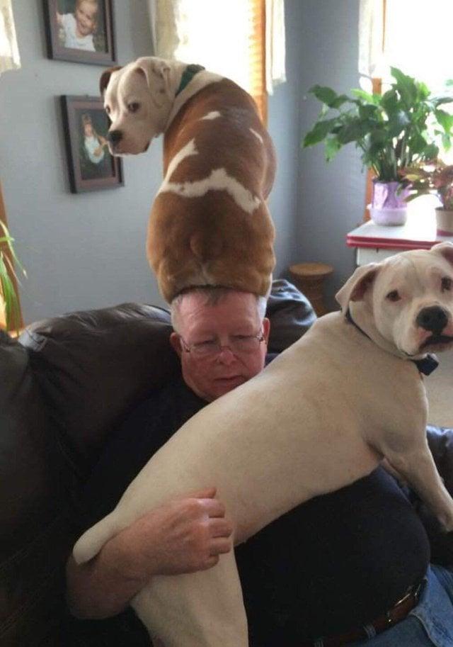 две собаки с хозяином