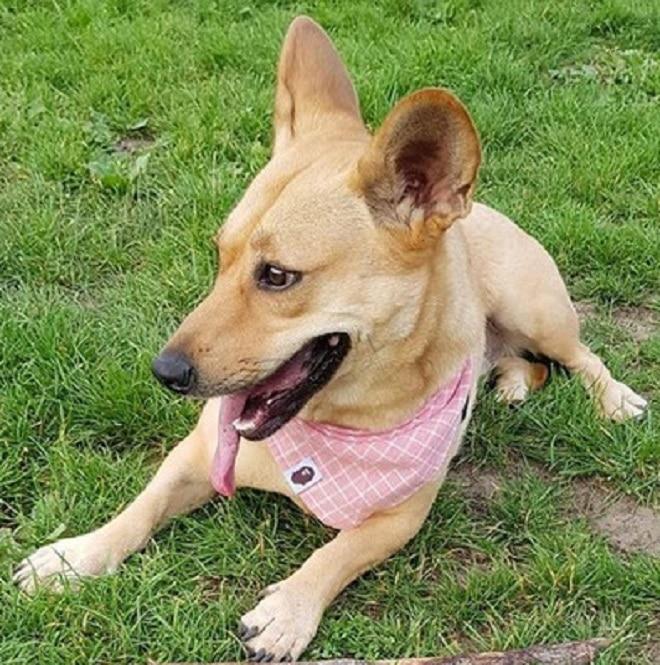 Собачка в траве